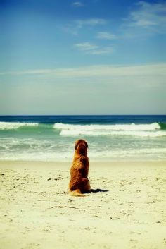 Another dog just walked up the beach, sat there, staring out to sea like Bliss but this time I knew what he was seeing. .(Flame Evermore)