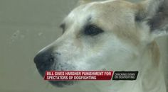 19 abused dogs found at house in Marianna, Arkansas: believed trained for fighting   WREG.com