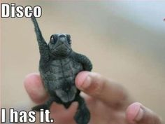 Disco. I Has It!
