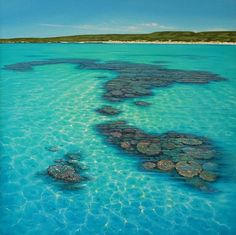 Ningaloo Reef, Western Australia // as you walk along the shoreline, you can see so many stingrays flitting off further into the ocean.