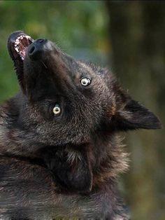 wolfalphawolf from tumblr