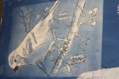 Distorting cyanotypes by drawing into prints!