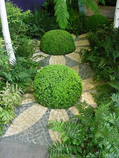Gorgeous little topiary garden Love the planned planting with tile work flowers