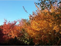 The colors of fall are here in Kansas City's Northland