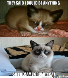 Ah, so THAT'S how Grumpy Cat became Grumpy Cat. Thanks to my great foster Mom Tabitha B.
