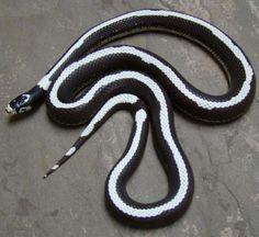 7 Best Beginner Pet Snakes + Key Facts (10+ Photos) - HappySerpent