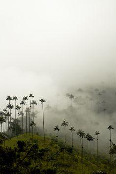 Que lindos paisajes en el Eje Cafetero! - Valle de Cocora, Colombia