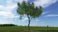 3d Tree Plant Model 397 Free Download by NguyenHuuHong 3d Tree, The Slate, Trees To Plant, Models, Plants, Free, Flora, Fashion Models, Plant