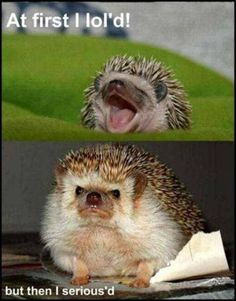 At first I lol'd, then I serious'd. #funnyanimals #funnyanimalpictures