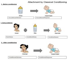 Classical Conditioning in Humans | Harry Harlow did a number of studies on attachment in rhesus monkeys ...