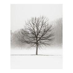 Winter Landscape Art  White Christmas Fog Snow by jennifersquires, $35.00