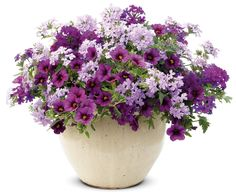 """Proven Winners 