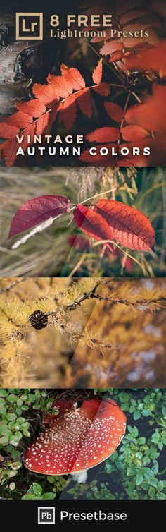 Vintage Autumn Colors – 8 FREE Lightroom Presets: Autumn is a wonderful season to embark on photographic explorations. The forest in particular with its manifold, bright colors offers exciting motifs – either from a distance or up close. This FREE collect