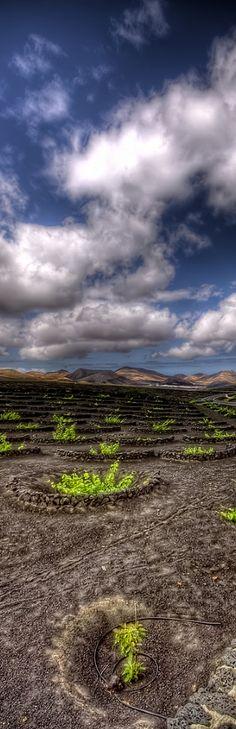 Vineyards, Lanzarote, Canary Islands, Spain