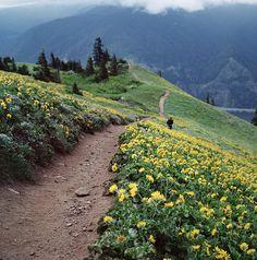 28 sentiers magiques qui ne demandent qu'à être traversés. Dog Mountain, État de Washington, États-Unis