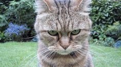 Your cat is disappointed in you #HLNtv.com