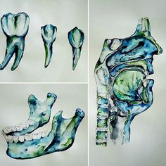 watercolour Anatomy art dental teeth jaw