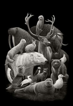 Arctic Fauna. Eclectic Subjects in Realistic Pencil Drawings. By Børge Bredenbekk.