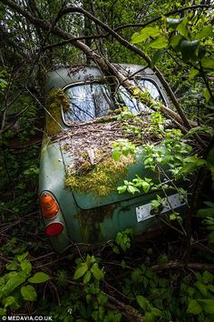 Photographer Svein Nordrum captures Sweden's classic car graveyard rusting in forest   Mail Online