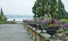 Mixed planters on a ledge of Scaveola, Helichrysum, Pelargonium (2) | Flickr - Photo Sharing!