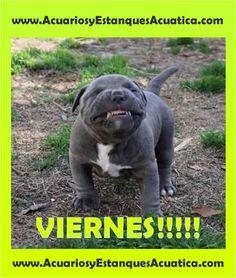 SE VIENE EL FINDEEEEEE!!! http://acuariosyestanquesacuatica.com/ Acuatica acuarios y estanques: Google+