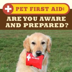 awareness on first aid on common Promote awareness of first-aid basics, injury prevention, child and family safety, and more animal safety our products can help prospective pet owners understand the responsibilities and challenges of caring for a pet, along with pet safety and general animal-safety guidelines, and important rabies prevention information.
