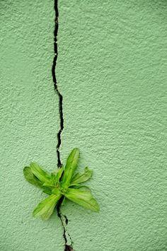 Green | Grün | Verde | Grøn | Groen | 緑 | Emerald | Colour | Texture | Style | Form | Pattern | by Pascale Albrand