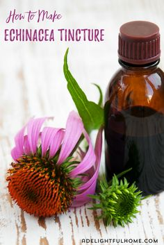 Echinacea is excellent for supporting the immune system during a cold. It's easy to make. I promise!