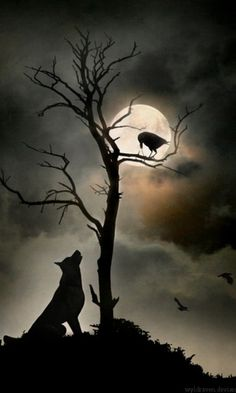 Love Wolves & Crows