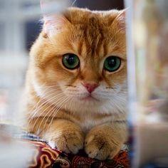 观看 @hosico_cat 发布的照片 · 13.5K 次赞