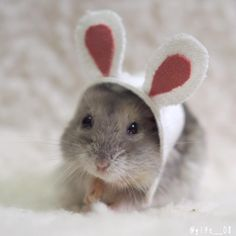 Óĺßæçĺõĺöæœ - Hamster & Co. Hamster Pics, Baby Hamster, Hamster Care, Cute Animal Memes, Cute Funny Animals, Cute Baby Animals, Animals And Pets, Hamster Russe, Cute Small Animals
