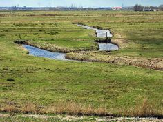 Ditches in the old polder landscape of Waterland, north of Amsterdam, The Netherlands