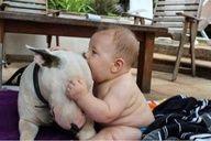 Nom nom nom! - #Bullterrier #Baby