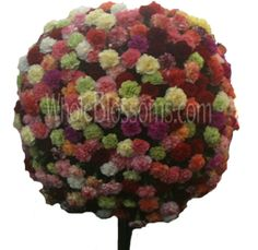 #DiscountWeddingFlowers with Whole Blossom....