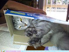 Any Box