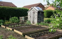 the allotment, raised beds, shed