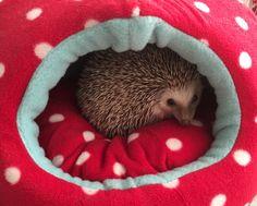 Lupe. Eriza. Hedgehog. La amo!