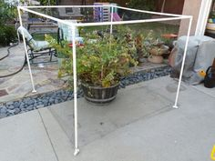 PVC, bird netting, zip ties, and twist ties. Two upright corners are zip tied for permanent strength and the other two are twist tired for easy access. Bird Netting, Pvc Projects, Backyard, Patio, Edible Garden, Fruit Trees, Garden Inspiration, Home And Garden, Deck