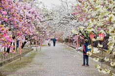 Japan Mint | © Tatters ❀/Flickr Beautiful Park, Most Beautiful, Osaka Japan, Natural Park, Japan Travel, Destination Wedding Photographer, Places To Go, Dolores Park, Photoshoot