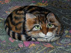 gato en piedras