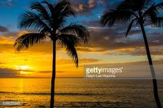 Stock Photo : A palm tree silhouetted on the beach against an orange sunset.