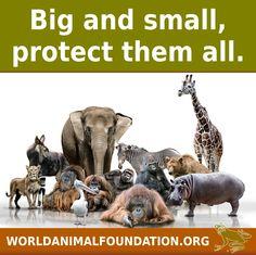 http://www.worldanimalfoundation.org