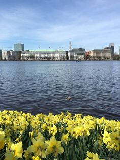 Frühling in der Hansestadt