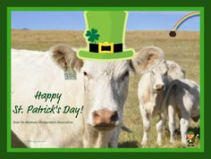 Happy St. Patrick's Day to #Moo!