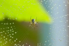 5 easy ways to keep your home spider free, pest control
