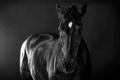 Coastal Horses on SCAD Portfolios