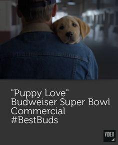 Puppy Love - Budweiser Super Bowl Commercial #BestBuds