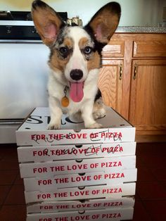 Everybody loves pizza!... Look at those ears!