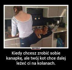 Bezuzyteczna.pl | Codzienna dawka wiedzy bezuzytecznej Polish Memes, Funny Mems, Happy Animals, Wtf Funny, Good Mood, Really Funny, Haha, Funny Pictures, Jokes