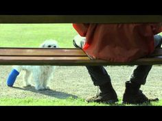 New Amazon Prime commercial stars an adorable dog in a cast